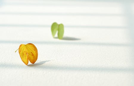 Window near two small heart-shaped leaves Stock Photo - 4291603