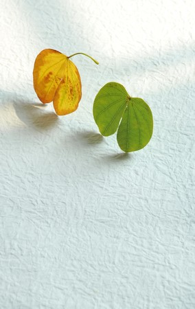 two small heart-shaped leaves Stock Photo - 4291602