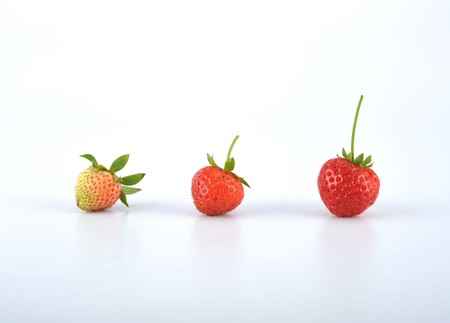 maturity: Strawberry from infancy to maturity