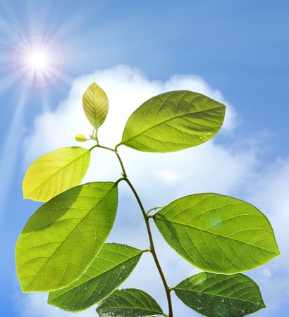 Under sunlight leaf in growth Stock Photo - 4548821