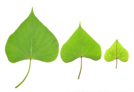 Three piece of small leaves photo