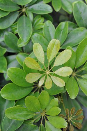 closeups: Close-ups of Leaves