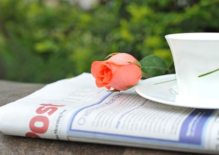 Newspaper teacup rose in garden Stock Photo