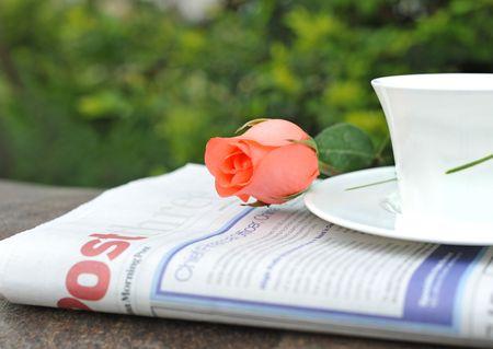 Newspaper teacup rose in garden Stock Photo