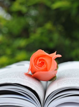 love story: Close-up rose and book