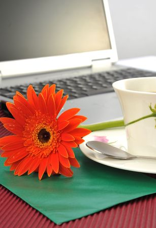 On desk's sun plant and teacup Stock Photo - 4726086