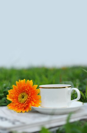 Teacup flower in outdoors lawn  photo