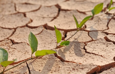 aridness: The cracked growth close up Stock Photo
