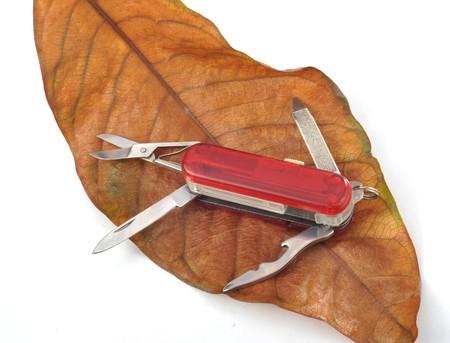 leaf cutter: Multipurpose cutter on leaf