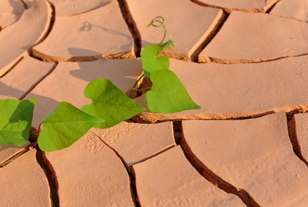 arid: Leaves on arid land