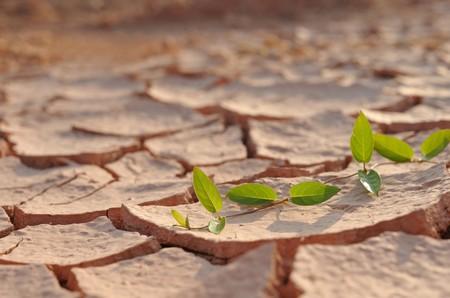 Leaves on arid land
