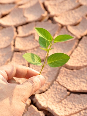 dry land: Dry land and green leaves