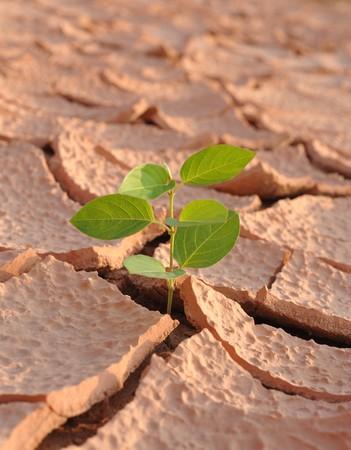 Tierra seca y hojas verdes