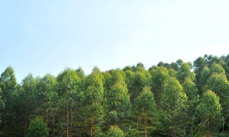 Blue sky woods  photo
