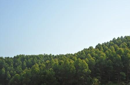 hillside grows seedling photo