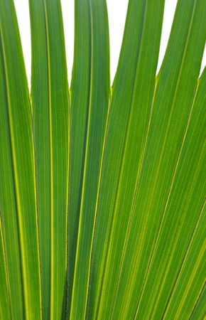 Macro image of a beautiful tropical palm leaf Stock Photo - 7233253