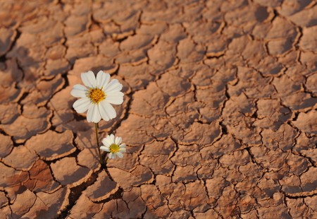 Pattern of cracked and dried soil With a single flower Stock Photo