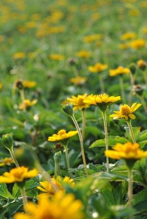 closeups: Wildflowers close-ups