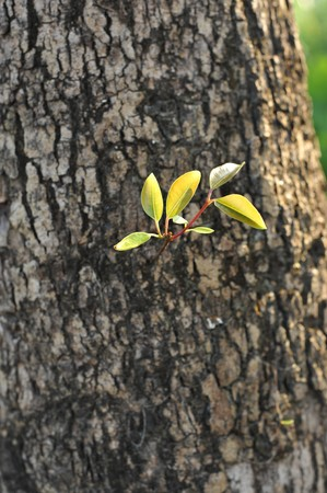 regenerate: New leaves sprouting from the trunk of a tree