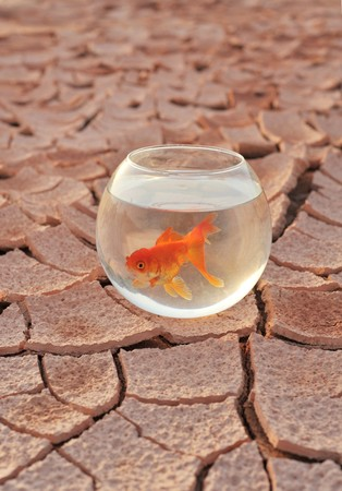 The dry land on the aquarium and goldfish photo
