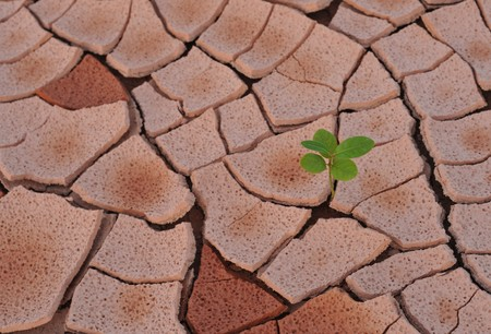 On the arid land grows plant  Stock Photo - 7238716