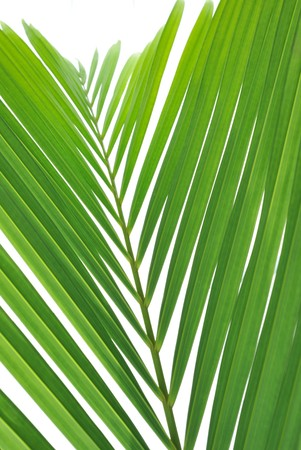 Looking through warm green palm tree leaves  Stock Photo