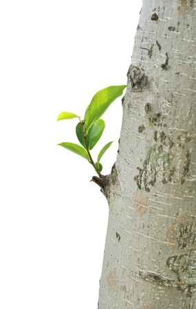 live again: Stem the growth of the seedlings