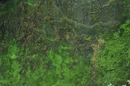 Moss rock background Stock Photo
