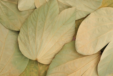 Close-ups on a pile of leaves