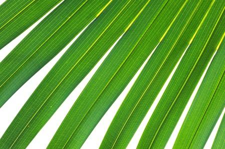 Close-up palm leaf