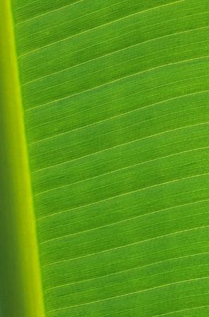 Close-up banana leaf background Stock Photo