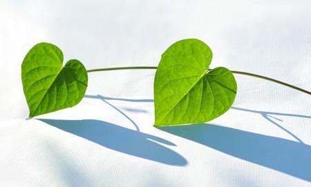 White background leaf