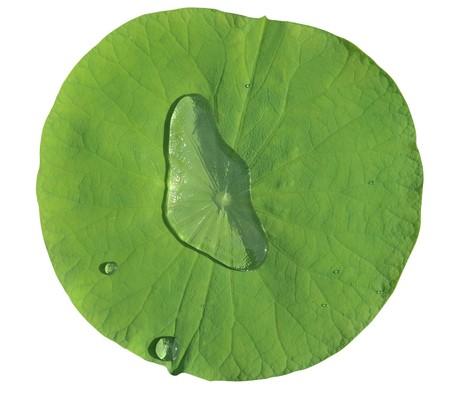 closeup lotus leaf Water drop
