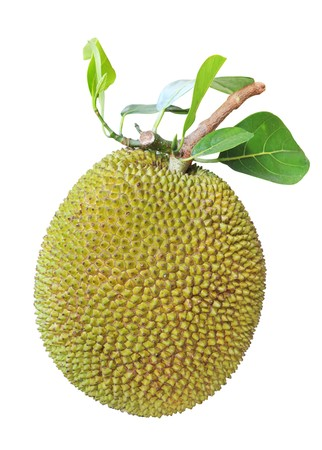 jackfruit isolated in white background