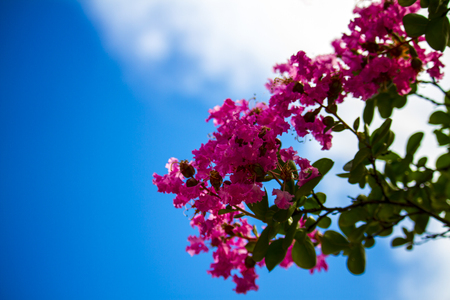 Blue sky and beautiful flowers 스톡 콘텐츠