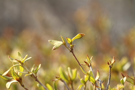 The buds that signal the spring