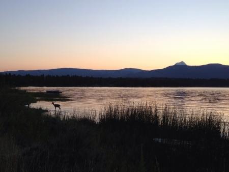 Pine hollow sunset