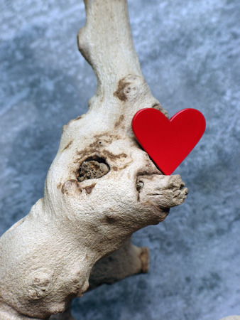 Red Heart on the Tree Branch Фото со стока