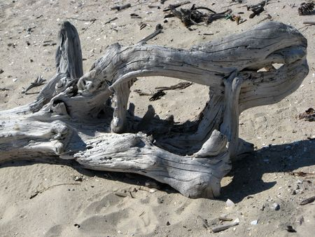 sapless: Pezzo di legno secco sulla spiaggia