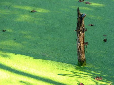 pervasive: Swamp