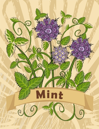 mint leaves: vintage card with mint plant