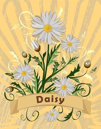vintage card with daisy Vector