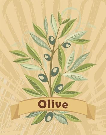 tarjeta de Vintage con oliva Vectores