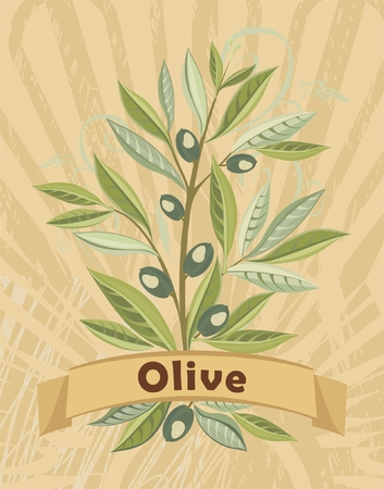 vintage card with olive Vector