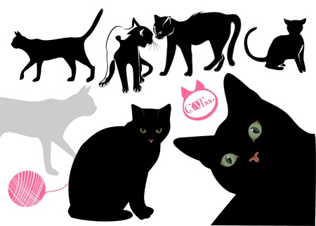 several: Cats life vector background