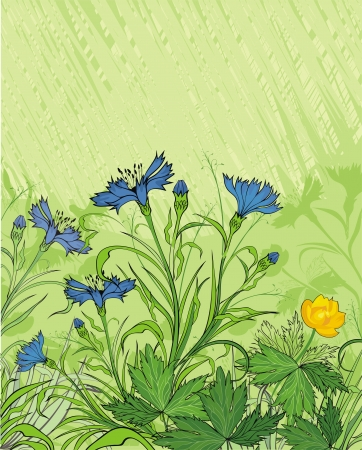 flowerhead: background with cornflowers and meadow plants