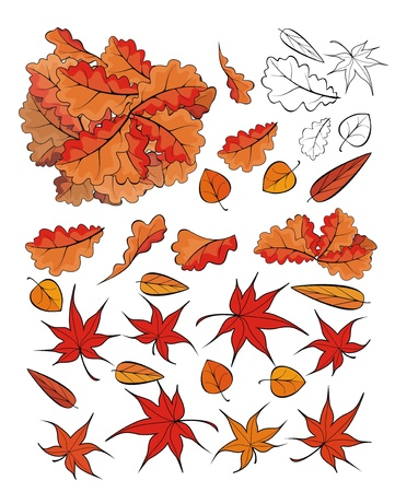 linden tree: fallen leaves - vector set for seasonal design