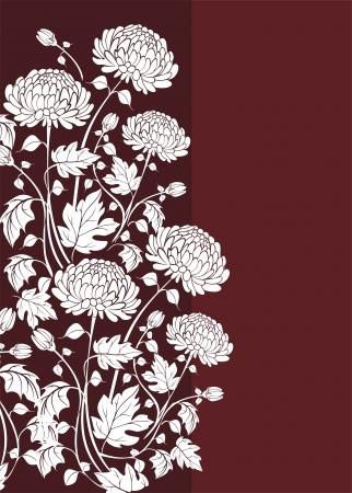 crisantemos: Elegante fondo con flores de crisantemos Vectores