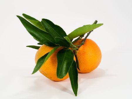 Tangerine Stock Photo - 5982807
