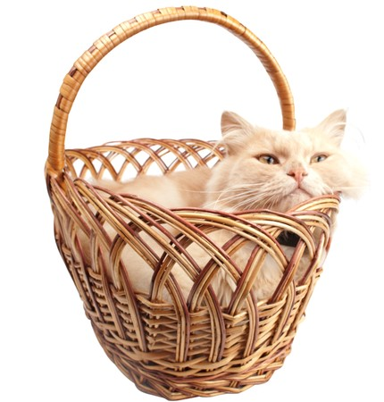 gingery: cat in a basket on a white background Stock Photo